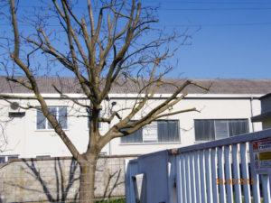 albero incapsulamento amianto